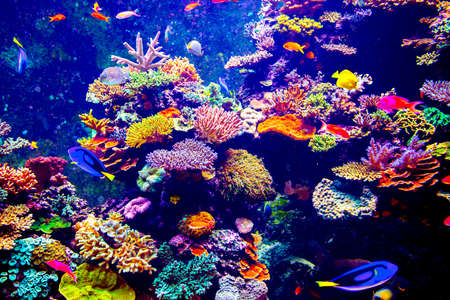 Coral Reef and Tropical Fish in Sunlight. Singapore aquarium Stock Photo
