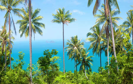 spring landscape: View of nice tropical background with coconut palms. Samui, Thailand. Vintage filter