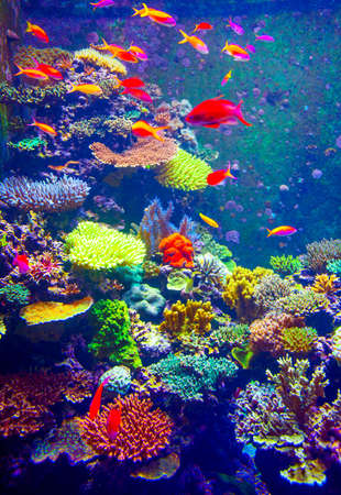 red coral colony: Coral Reef and Tropical Fish in Sunlight.