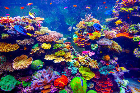 Coral Reef and Tropical Fish in Sunlight.  Imagens