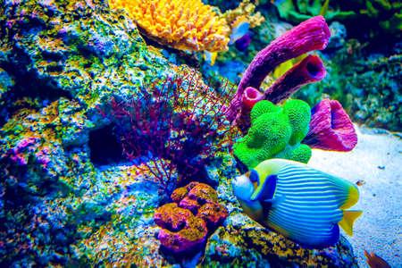 Korallenriff und tropische Fische im Sonnenlicht. Standard-Bild - 40164911