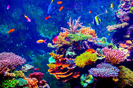 Coral Reef and Tropical Fish in Sunlight.  Stockfoto