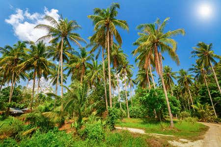 aonang: Tropical palm plantation in Ao-Nang. Krabi. Thailand
