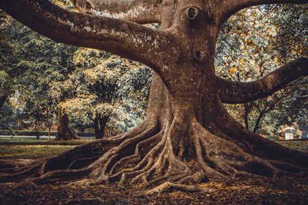 huge tree: The root of the tree in the forest. Fashion colored and toned Stock Photo