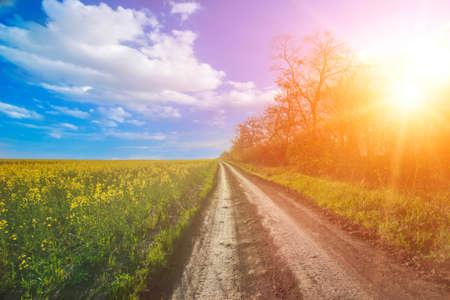 beautiful sunshine: Beautiful nature landscape. Sunshine in Bakota Park, Ukraine