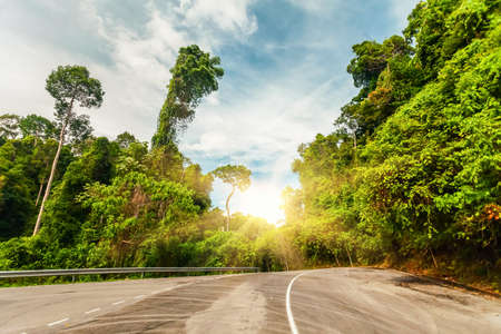 beetwen: asphalt Country road beetwen green trees in sunset Stock Photo
