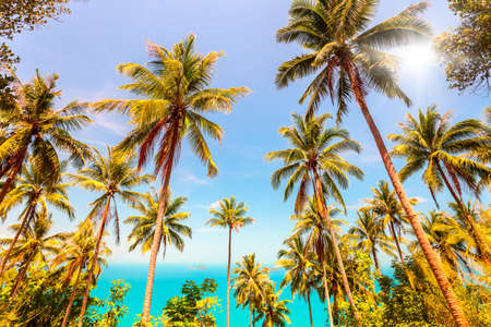 View of nice tropical landscape with coconuts palm trees and sea