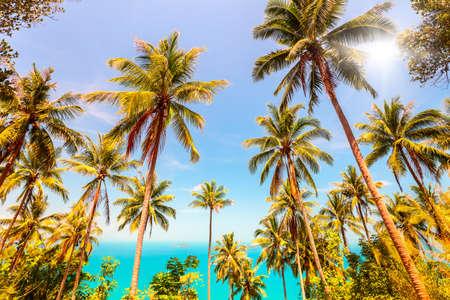 palmier: Vue de Nice paysage tropical avec des arbres de noix de coco et de palmier mer Banque d'images