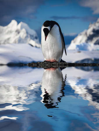penguin standing on the rocks Imagens