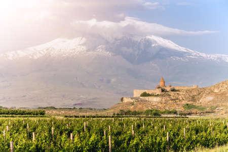 grape field: Grape field in Ararat valley. View of Khor Virap and Mount Ararat Stock Photo