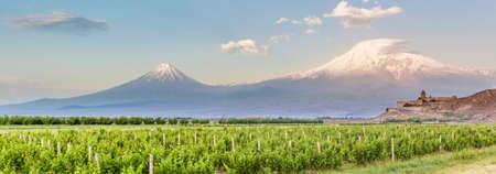 Grape field in Ararat valley. View of Khor Virap and Mount Ararat. Exploring Armenia Stock Photo