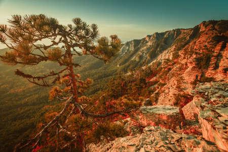 Pine tree on top of the mountain in autumn. Carpathian mountains, Ukraine Stock Photo