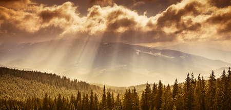 Het majestueuze bos van de pijnboomboom bij de vallei van de de herfstberg. Dramatische en schilderachtige ochtendscène. Warm tonisch effect. Karpaten, Oekraïne, Europa. Het landschap van de schoonheid worldmountain op de bewolkte hemelachtergrond met zonstralen