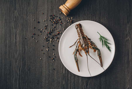 Food concept. One big green fresh crawfish on white plate with green herbs. Black and white pepper grains around. Gray wooden table background. Instagram vintage toning effect. Top view. Copy space Imagens