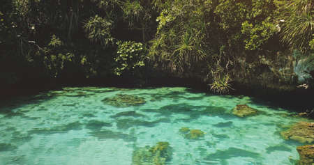 Closeup limpid lake with salt water at exotic green plants. Emerald saltwater serene scene at tropical leaves. Relaxing and calm summer scape of Sumba Island landmark, Indonesia, Asia at aerial view