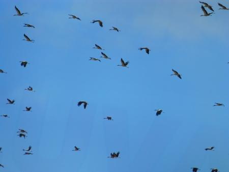 stork migration photo