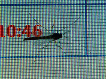 Mosquito on monitor Stock Photo - 25477152