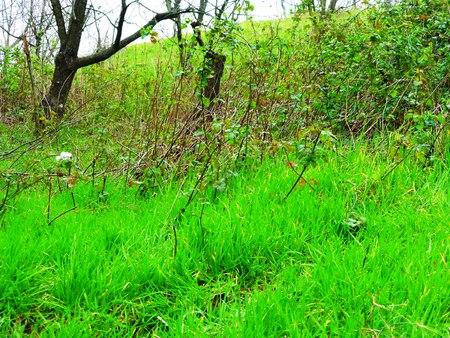 Baum, Feld, Wiese und Wald Standard-Bild - 62442000