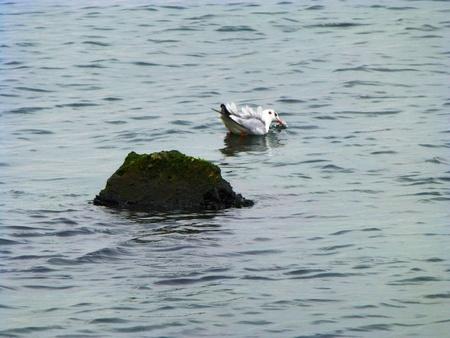 Sea gull Standard-Bild - 62500194