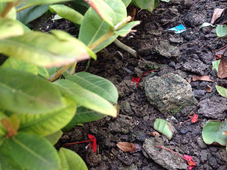 shadowed: Wet stone shadowed by leaves Stock Photo
