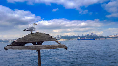 perched: Seagull perched on wooden umbrella. Stock Photo
