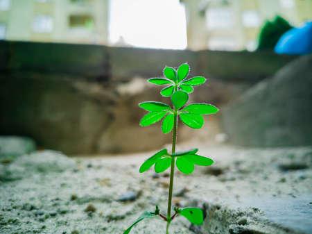 Green plant glowing on concrete ground. November 07, 2018. Banco de Imagens