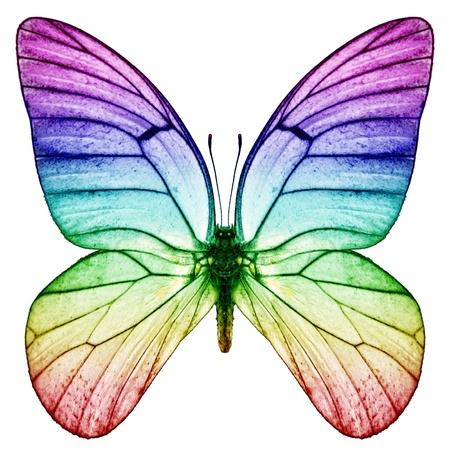 chakra: papillon arc-en- Banque d'images