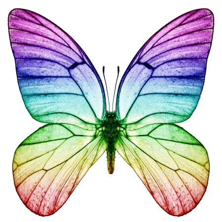 mariposa: rainbow Butterfly Foto de archivo
