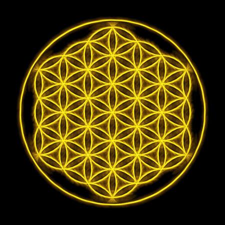 flower of live: Flower Of Live Yellow Light