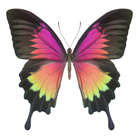 Butterfly colorful Stock Photo