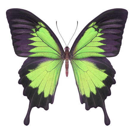 Butterfly green Stock Photo