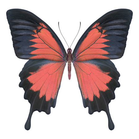 Butterfly red Stock Photo