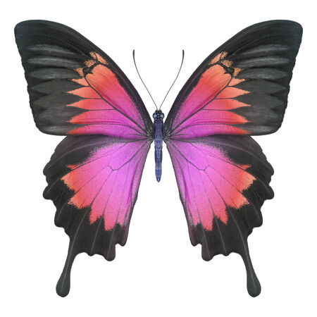Butterfly pink red Stock Photo