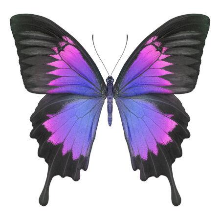 Butterflyblue purple Stock Photo