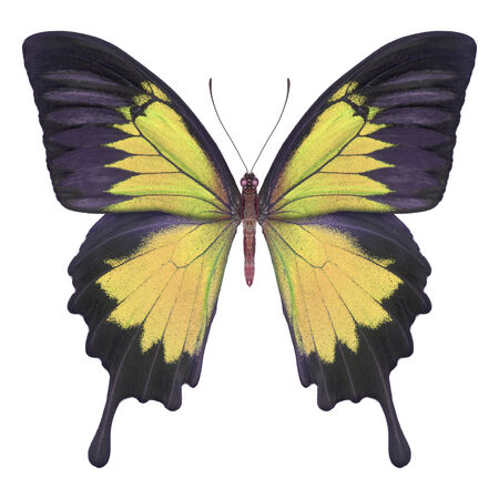 Butterfly yellow Stock Photo