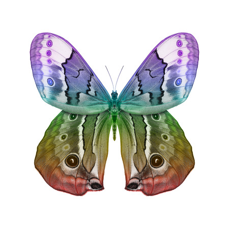 Fantasy Butterfly isolated