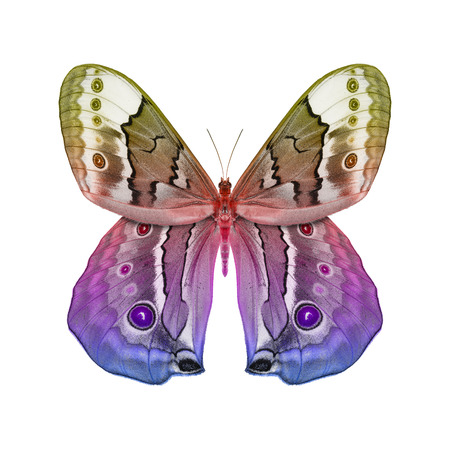 Fantasy Butterfly isolated  photo