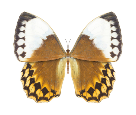 Butterfly brown photo