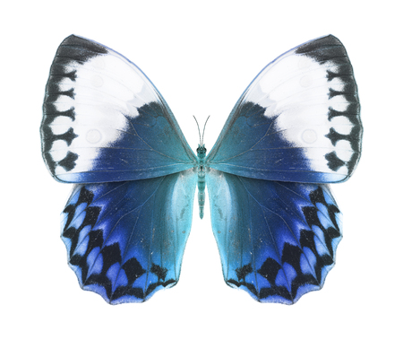 Butterfly blue photo