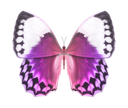 Butterfly purple photo