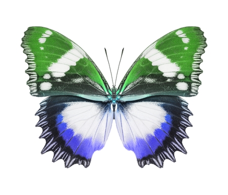 Butterfly blue green photo