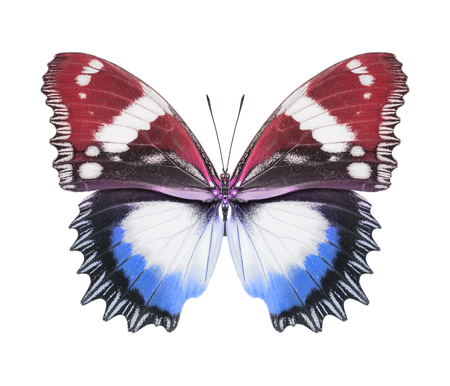 Butterfly red blue photo