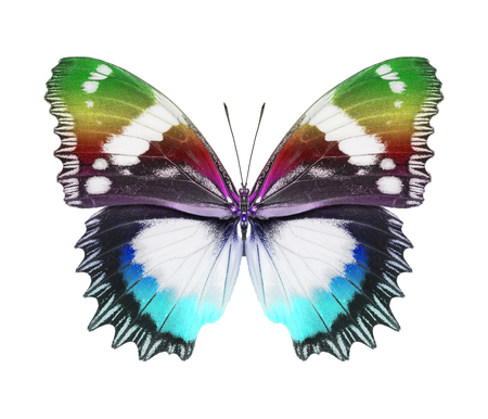 Butterfly colorful photo