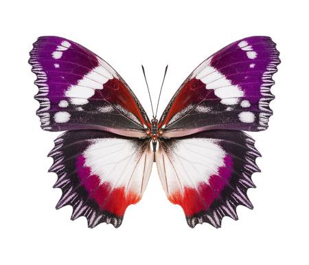 Butterfly purple red