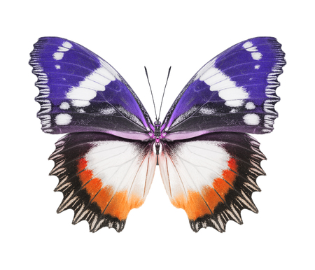 Butterfly purple orange photo