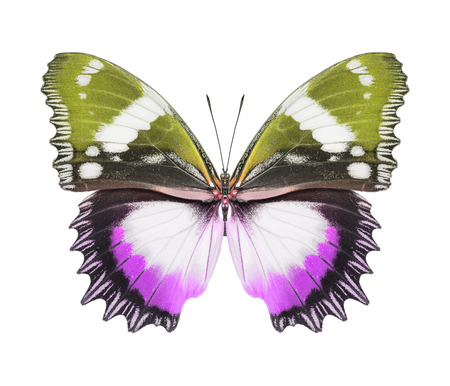Butterfly purple green photo