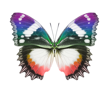 Butterfly Rainbow Colors photo