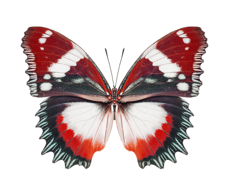 Butterfly red photo