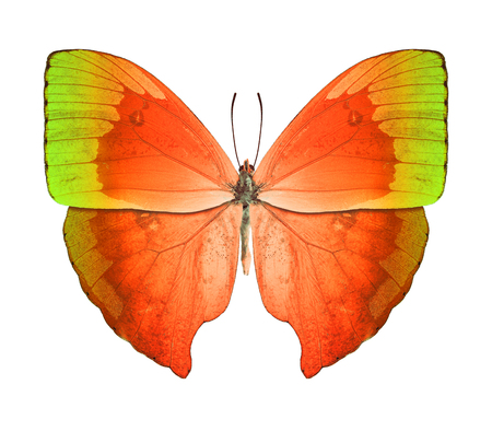 Butterfly orange green photo