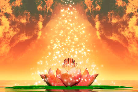sacral chakra: Sacred Lotus